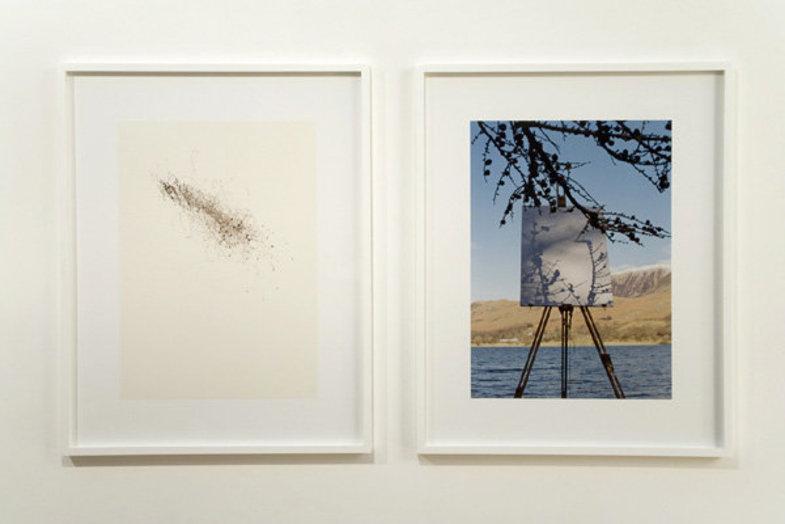 درختهایی که نقاشی میکنند +تصاویر