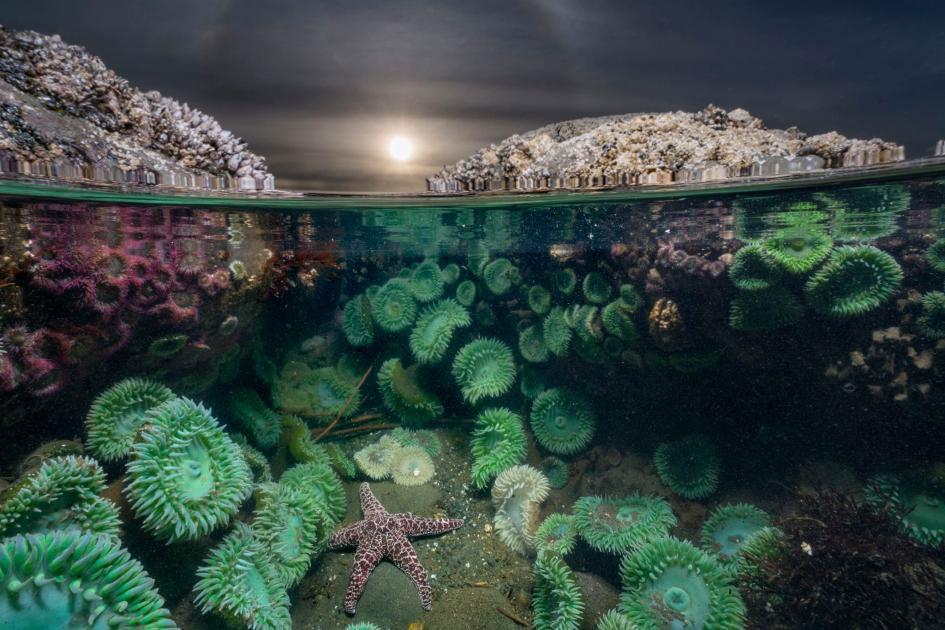 عکس روز نشنال جئوگرافیک؛ ستاره دریایی تنها