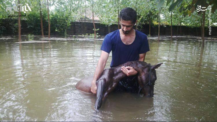 تصویری دردناک از خسارت سیل در گیلان