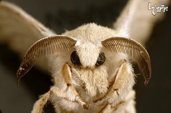 حشرات نازی که خودشان را در دلتان جا میکنند+عکس
