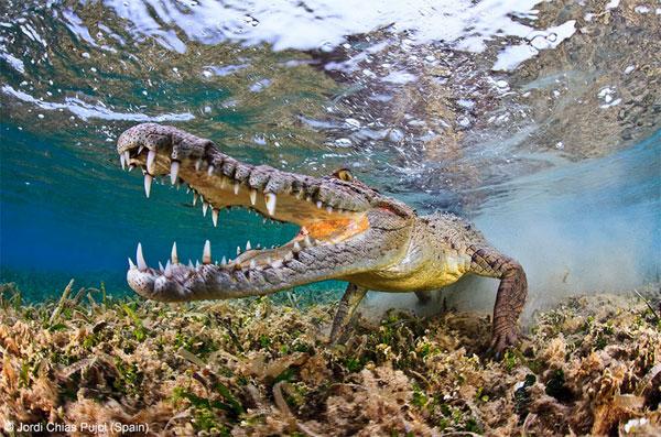 زیباترین و برترین عکس های سال حیات وحش