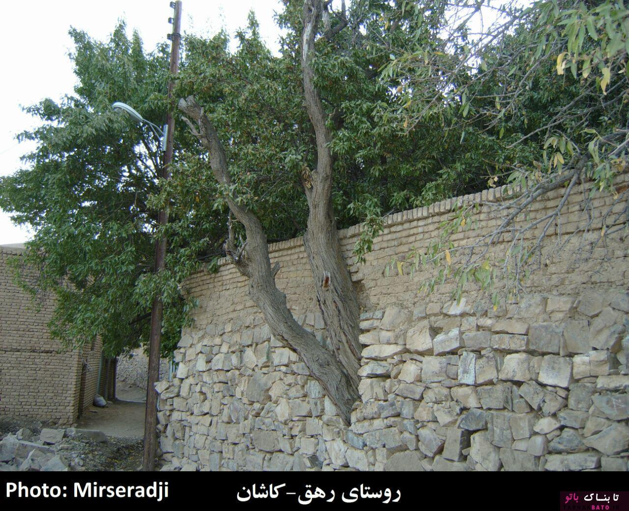 رویکرد عجیب ایرانی ها در برابر درخت