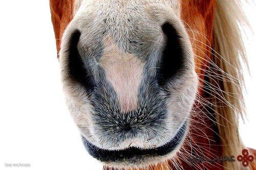 اسبها و واقعیات جالبی که درباره آنها نمیدانستید!