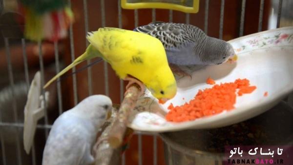 سبزیجات مناسب برای پرندگان زینتی