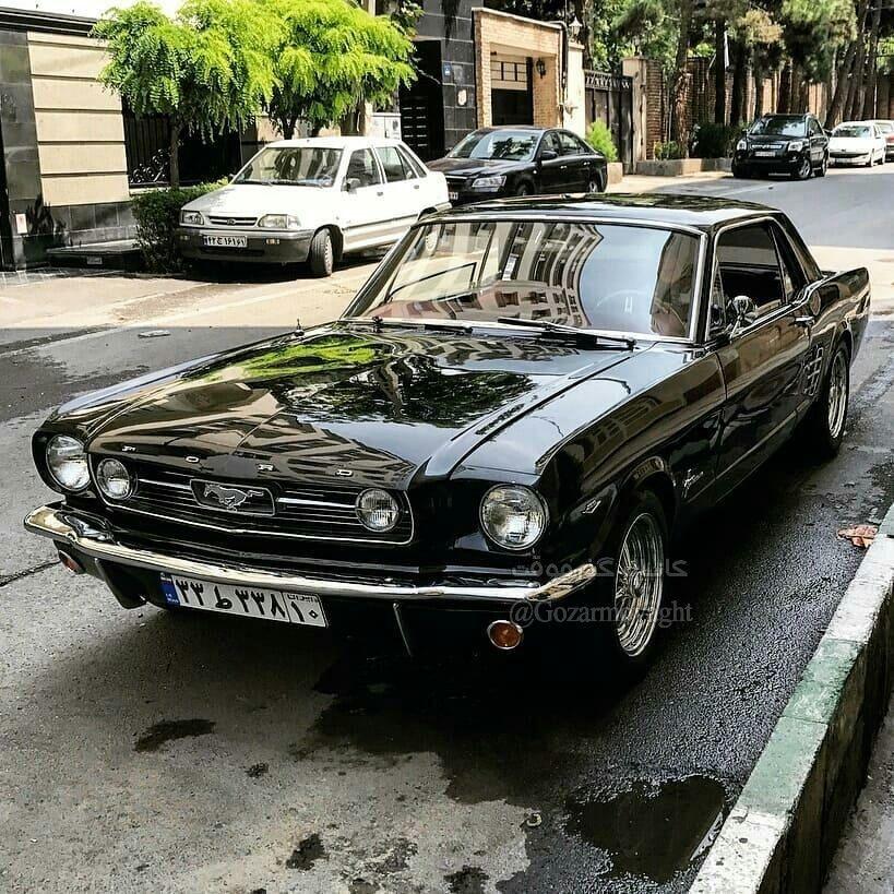 اسب سرکش آمریکایی در تهران + عکس