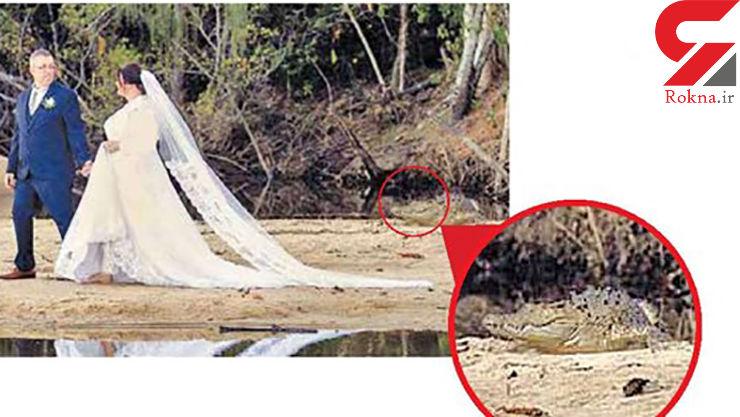 تصویر شوکه کننده از ازدواج در کنار تمساحها!؟