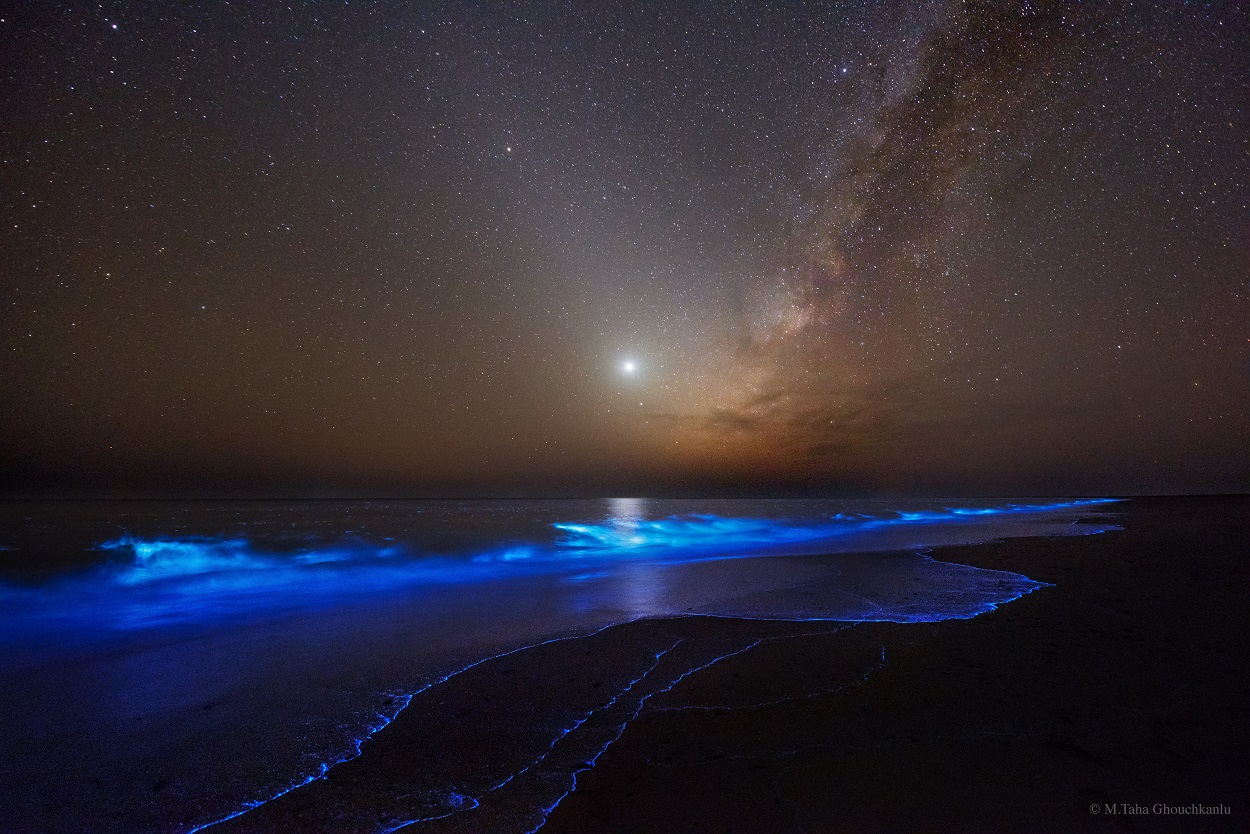 پدیده جالبی که سواحل چابهار را درخشان میکند +تصاویر
