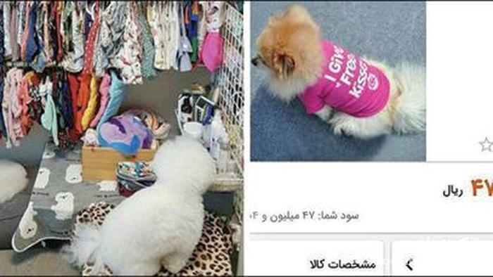 تیشرت ۴ میلیون و ۷۰۰ هزار تومانی یک سگ اشرافی در ایران+عکس