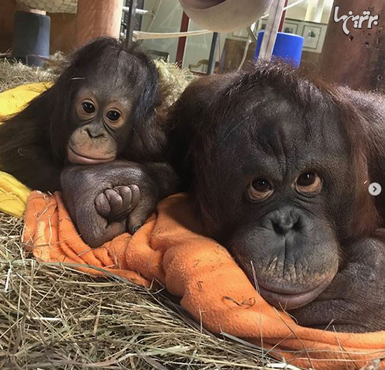 تصاویر زیبای مادر و فرزندی در دنیای حیوانات
