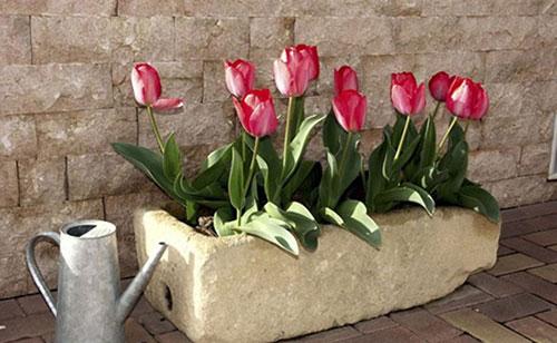 با این گلها بهار را به خانه ببرید