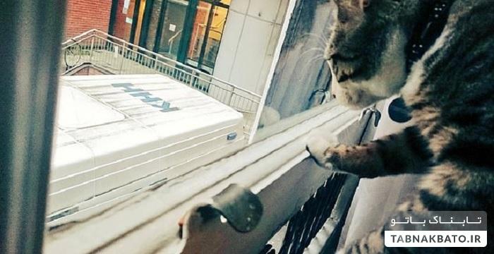 سرنوشت گربه جولیان آسانژ پس از دستگیری او
