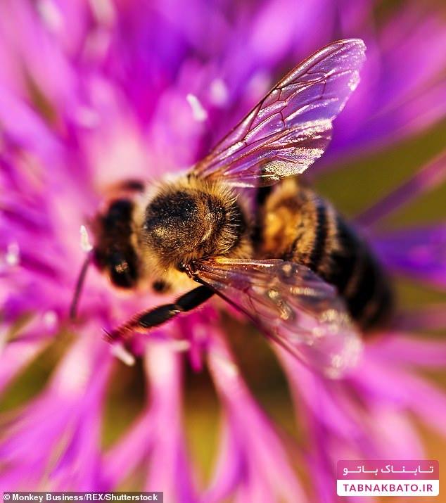 چرا مورگان فریمن در خانه اش زنبور عسل پرورش میدهد؟