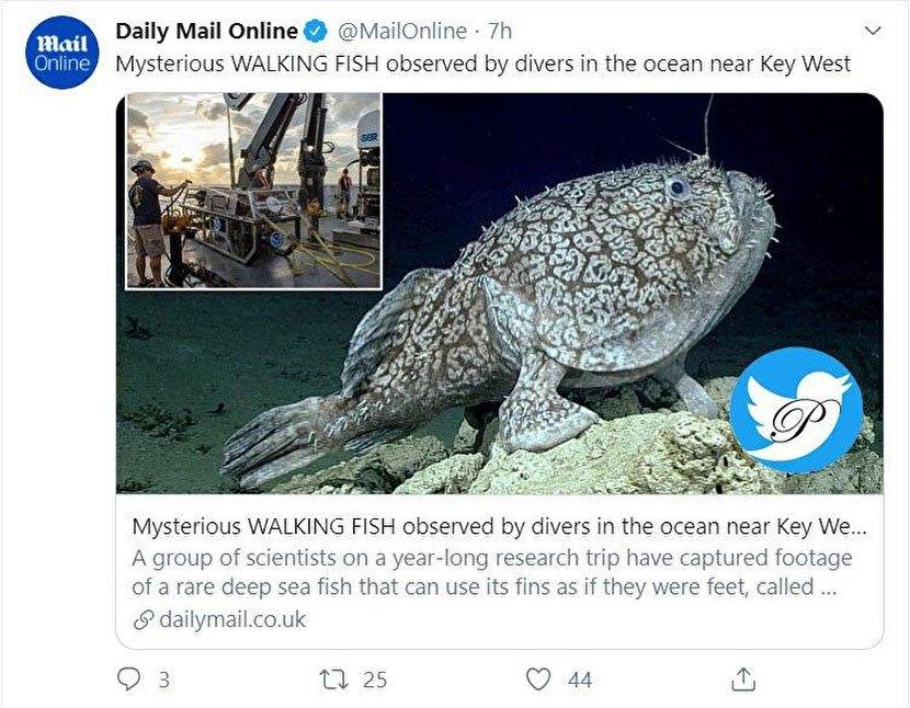 ماهی نادر ۱.۵ متری که پا دارد و در اقیانوس راه میرود!؟ +عکس