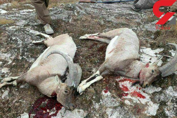 عکس های تلخ از یک رفتار غیرانسانی در مهران