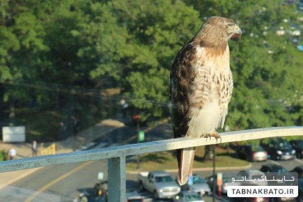 پرنده معروف در سازمان سیا
