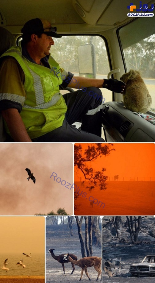 کشته شدن بیش از نیم میلیارد حیوان در آتش سوزی استرالیا +عکس