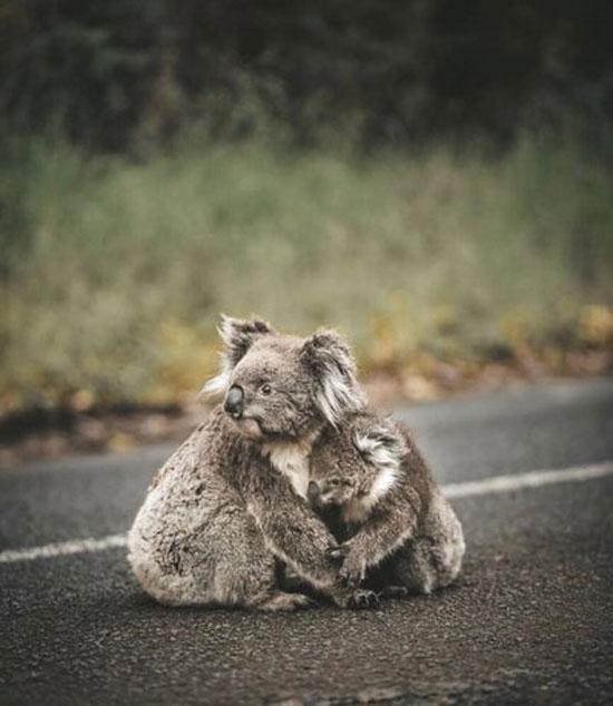 غمگین و دلبرترین تصاویر این روزهای جهان