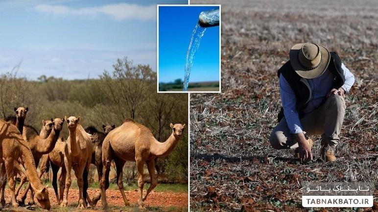 روش عجیب استرالیاییها برای جلوگیری از آتش سوزی