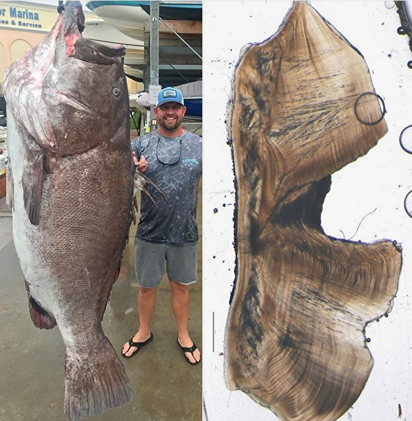 صید ماهی غول پیکر در ساحل فلوریدا +عکس