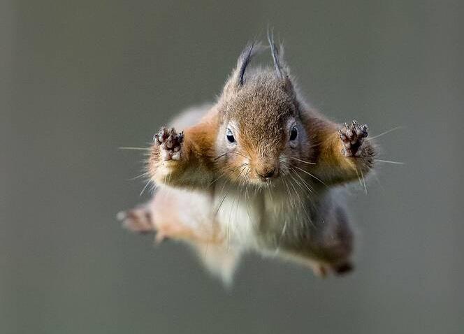 پرش تماشایی یک سنجاب + عکس