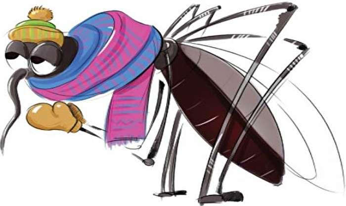 پشهها در زمستان کجا غیب شان میزند؟
