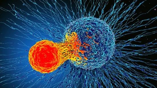 کشفی تازه که شاید همه سرطانها را معالجه کند