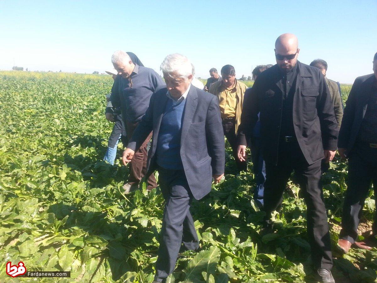 وقتی آقای وزیر روی دسترنج کشاورز ایرانی راه می رود! +عکس
