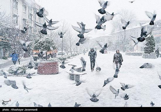 جلوه زیبای زمستان؛ رشت سفیدپوش شد
