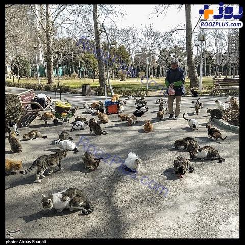 کار خیر یک هموطن برای گربه های شهر+عکس