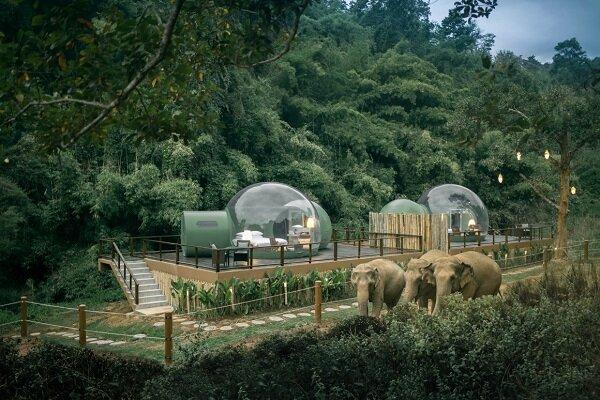 راه اندازی هتل جنگلی حبابی برای همنشینی با فیلها+عکس