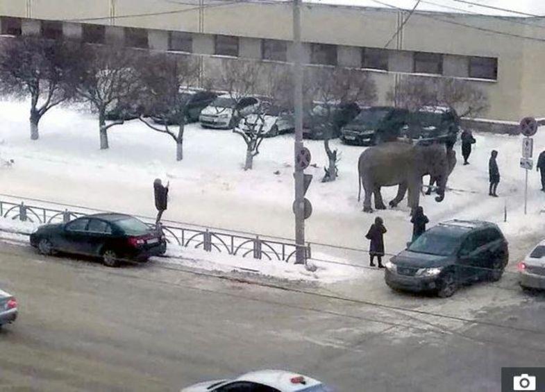 فرار فیل ها به داخل خیابان +عکس