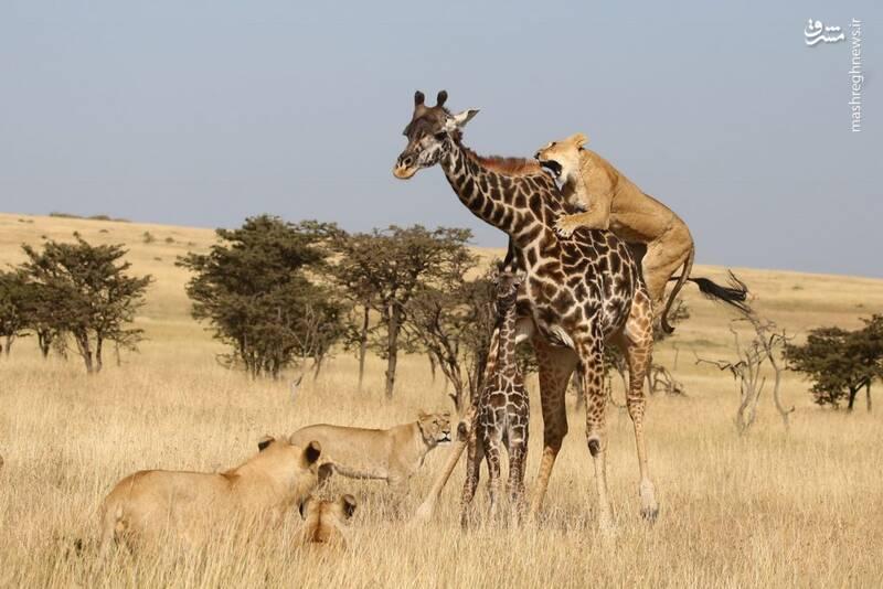 نبرد دیدنی مادر و فرزند با سلطان+عکس