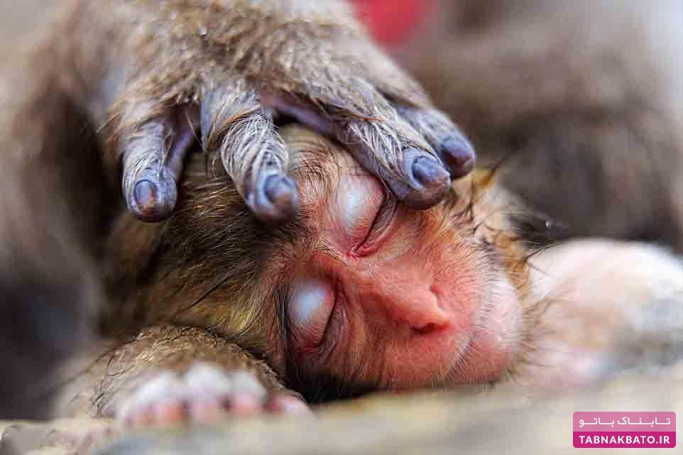 عکس های زیبا و باورنکردنی از حیات وحش