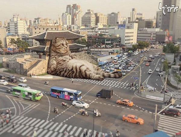 گربههای غول پیکر در خیابانهای شهر
