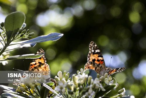پروانهها در شهر؛ قشنگهای ناخوانده!