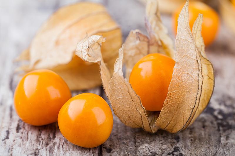 خواص میوه فیسالیس و فایدههای مصرف آن