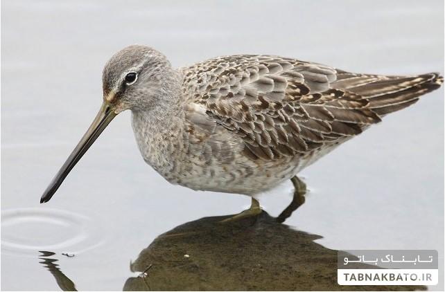 کشف پرندهای جدید در ایران