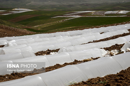 مزارع پلاستیکی - قزوین