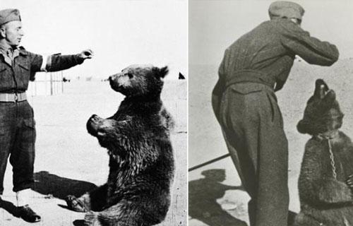 ماجرای خرس مشهور ایرانی که به سربازی رفت + عکس