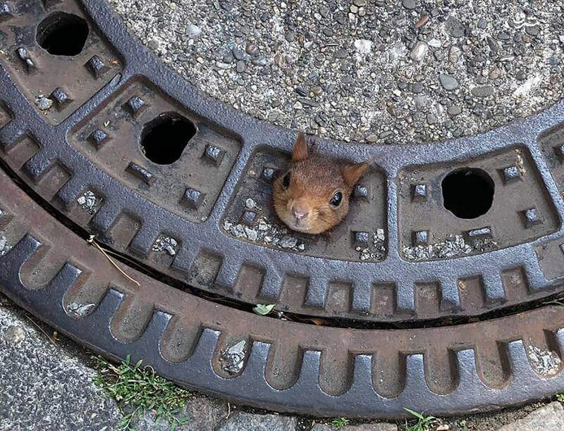 گیر کردن گردن سنجاب بازیگوش+عکس