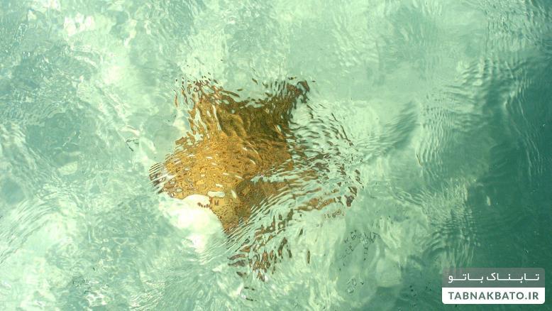 کشفیات عجیب در اعماق دریاها
