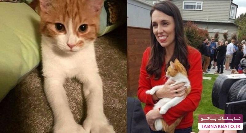 واکنش نخست وزیر نیوزیلند به تصادف گربه اش بعد از دو سال