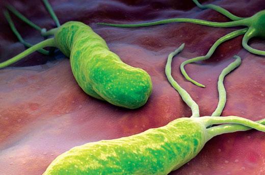 میکروب معده چیست؟