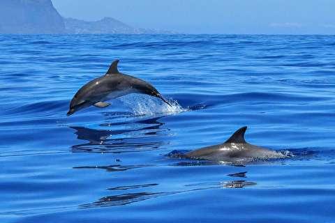 مسابقه دلفینها با جت اسکی