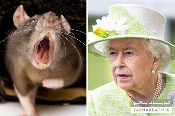 هجوم موشها به آشپزخانه کاخ باکینگهام