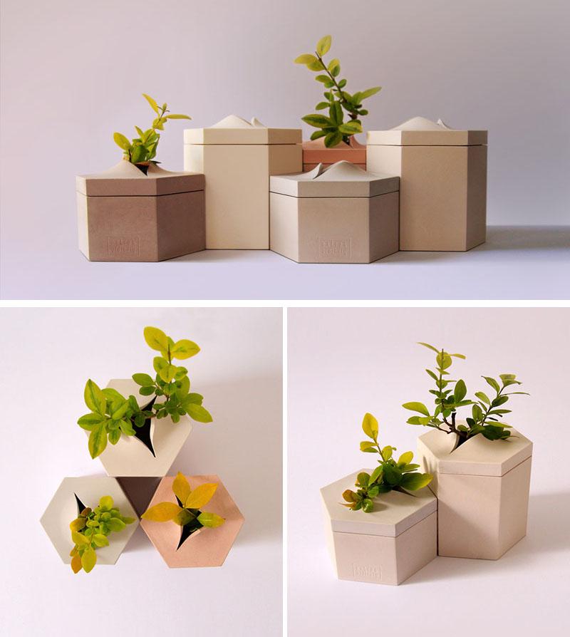 طراحی گلدان های دیواری تامسا برای نمایش قدرت طبیعت
