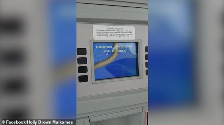 مار زنده در جایگاه پمپ بنزین+عکس