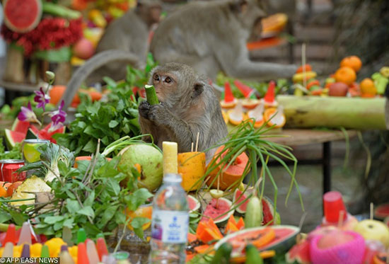 چیزهای جالب و عجیبی که فقط در تایلند میبینید