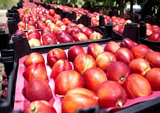 میوههای شیرین تابستانی چاق میکنند؟