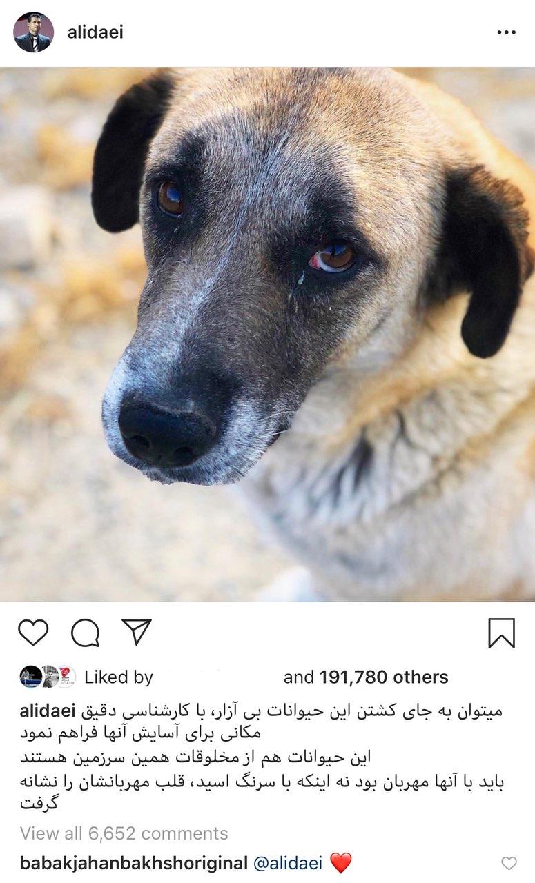 واکنش علی دایی به سگ کشی با اسید+ عکس